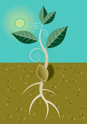Plant Side image